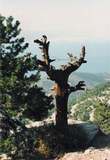 SON ŞAHİTLERDEN HATIRALAR-8